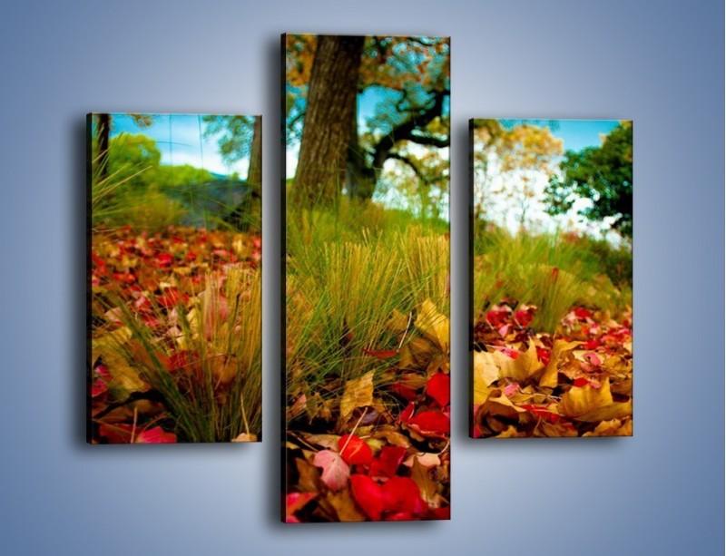 Obraz na płótnie – Droga usłana liśćmi – trzyczęściowy KN172W3