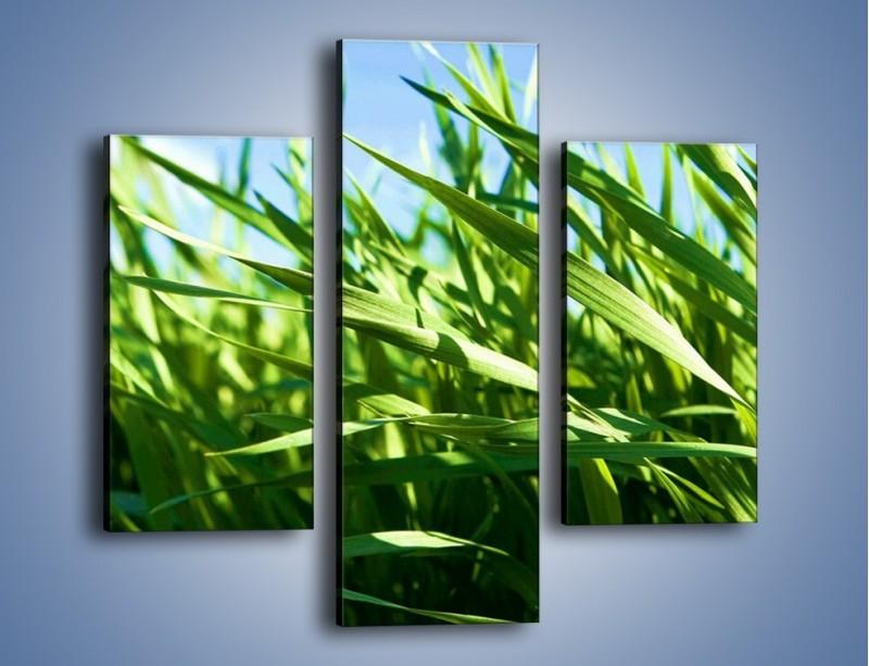 Obraz na płótnie – Wiatr w łodygach – trzyczęściowy KN176W3