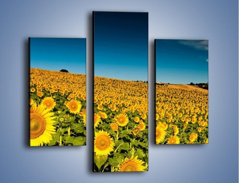 Obraz na płótnie – Słonecznikowe uśmiechnięte główki – trzyczęściowy KN205W3