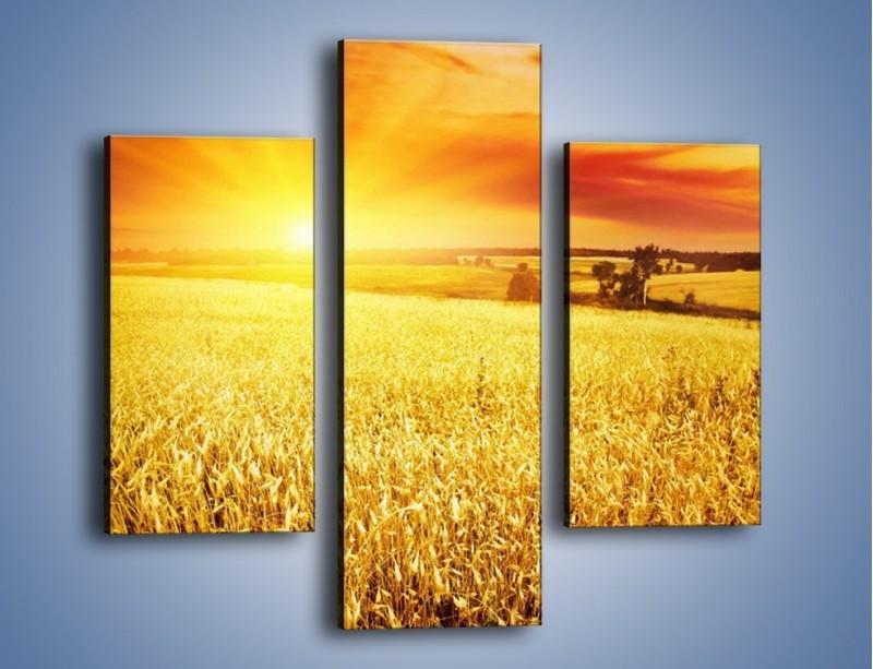 Obraz na płótnie – Zboże złote jak słońce – trzyczęściowy KN398W3