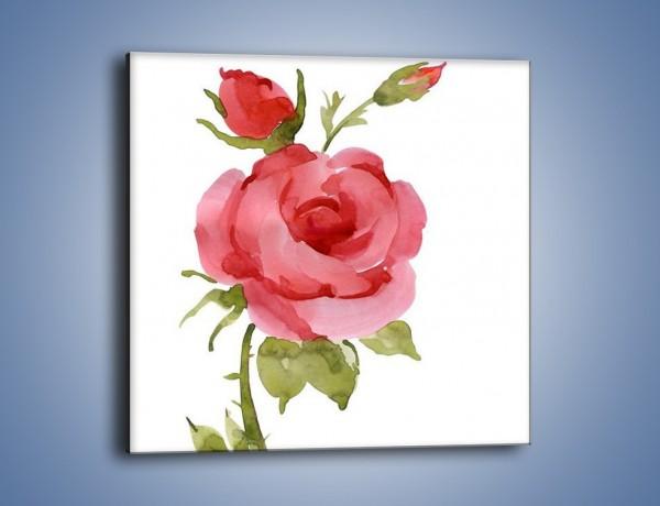 Obraz na płótnie – Róża nie do końca rozwinięta – jednoczęściowy kwadratowy GR501