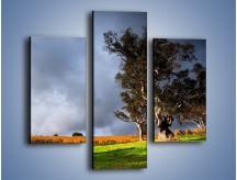 Obraz na płótnie – Burzowe chmury nad polaną – trzyczęściowy KN748W3