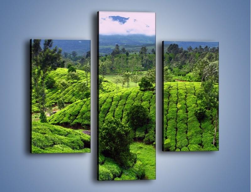 Obraz na płótnie – Rozległa zielona kraina – trzyczęściowy KN872W3