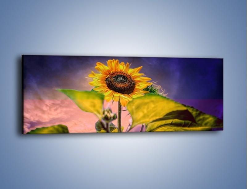 Obraz na płótnie – Słonecznik na ciemnym tle – jednoczęściowy panoramiczny GR634