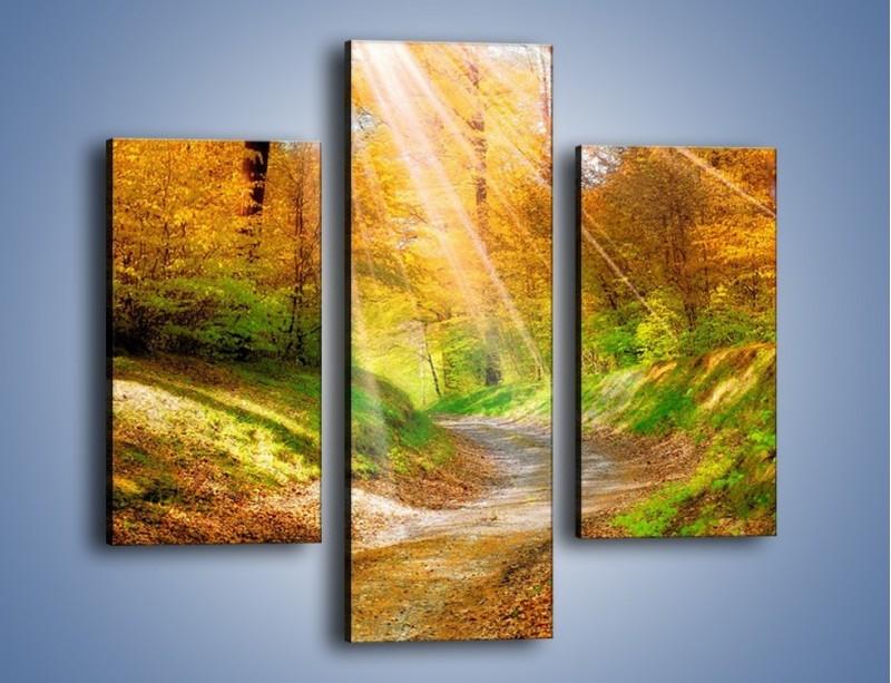 Obraz na płótnie – Promienną i słoneczną ścieżką przez las – trzyczęściowy KN989W3