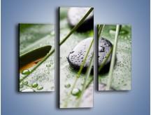 Obraz na płótnie – Krople deszczu na liściu – trzyczęściowy O203W3