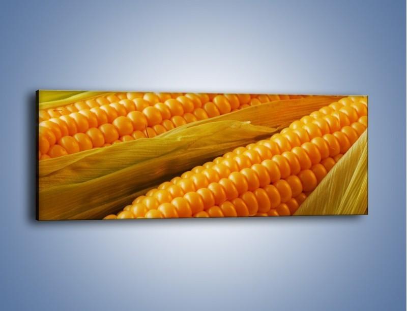 Obraz na płótnie – Kolby dojrzałych kukurydz – jednoczęściowy panoramiczny JN046