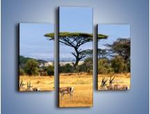 Obraz na płótnie – Antylopy w słonecznej afryce – trzyczęściowy Z003W3