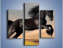 Obraz na płótnie – Czarny koń w galopie – trzyczęściowy Z008W3