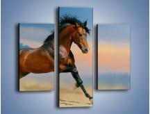 Obraz na płótnie – Brązowy koń na pustyni – trzyczęściowy Z011W3