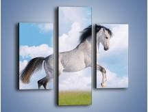 Obraz na płótnie – Białe obłoki i koń – trzyczęściowy Z019W3