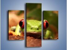 Obraz na płótnie – Bystre oczka małej żabki – trzyczęściowy Z023W3