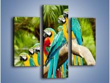 Obraz na płótnie – Kolorowe papugi w szeregu – trzyczęściowy Z029W3