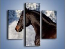 Obraz na płótnie – Brązowy ogier na zimowym spacerze – trzyczęściowy Z056W3