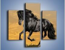 Obraz na płótnie – Bieg z koniem po polanie – trzyczęściowy Z057W3
