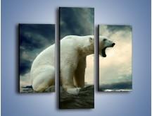 Obraz na płótnie – Donośny krzyk polarnego niedźwiedzia – trzyczęściowy Z114W3