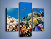 Obraz na płótnie – Fauna i kolorowi towarzysze – trzyczęściowy Z116W3