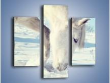 Obraz na płótnie – Arab w śnieżnym puchu – trzyczęściowy Z144W3