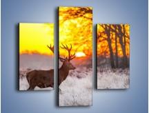 Obraz na płótnie – Jeleń o zachodzie słońca – trzyczęściowy Z164W3