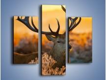 Obraz na płótnie – Ciężkie poroże jelenia – trzyczęściowy Z165W3