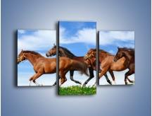 Obraz na płótnie – Galopujące stado brązowych koni – trzyczęściowy Z172W3