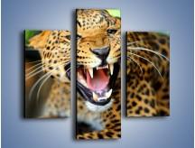 Obraz na płótnie – Jaguar z pazurem – trzyczęściowy Z184W3