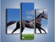 Obraz na płótnie – Dziki koń w biegu – trzyczęściowy Z194W3