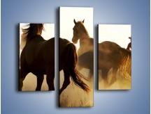 Obraz na płótnie – Cowboy wśród koni – trzyczęściowy Z206W3
