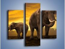 Obraz na płótnie – Ciekawość małego słonika – trzyczęściowy Z212W3