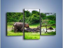 Obraz na płótnie – Kąpiel ze słoniem – trzyczęściowy Z216W3