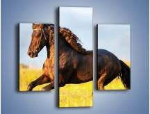 Obraz na płótnie – Dziki koń i jego mięśnie – trzyczęściowy Z232W3
