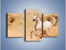 Obraz na płótnie – Klacz w tumanach piasku – trzyczęściowy Z233W3