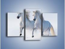 Obraz na płótnie – Gonitwa konna w bieli – trzyczęściowy Z240W3