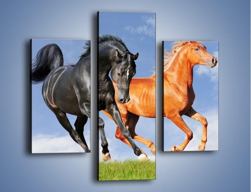 Obraz na płótnie – Czarny rudy i koń – trzyczęściowy Z241W3