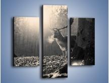 Obraz na płótnie – Jeleń w sepii – trzyczęściowy Z250W3