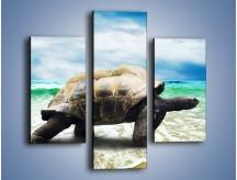 Obraz na płótnie – Jak tu nie kochać żółwi – trzyczęściowy Z251W3