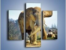Obraz na płótnie – Ciężkie życie słonia – trzyczęściowy Z273W3