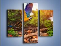 Obraz na płótnie – Kolorowa papuga w locie – trzyczęściowy Z280W3