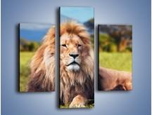 Obraz na płótnie – Dostojny lew na sawannie – trzyczęściowy Z282W3