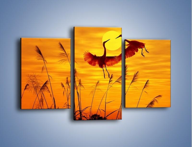 Obraz na płótnie – Czaple i zachód słońca – trzyczęściowy Z302W3