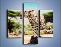 Obraz na płótnie – Cała zwinność geparda – trzyczęściowy Z315W3