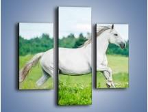 Obraz na płótnie – Biały koń i leśna polana – trzyczęściowy Z317W3