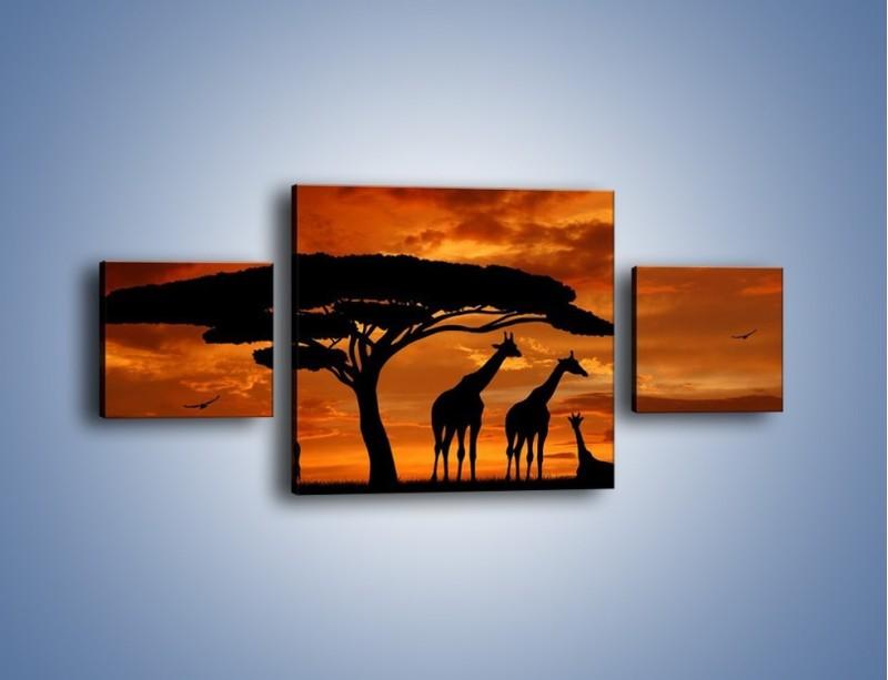 Obraz na płótnie – Żyrafy wieczorową porą – trzyczęściowy GR266W4
