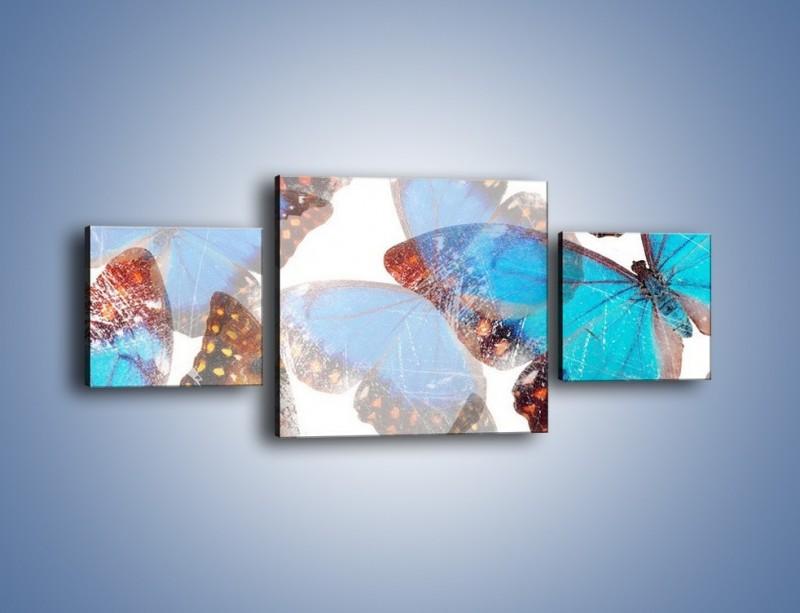 Obraz na płótnie – Motyl w niebieskim kolorze – trzyczęściowy GR403W4