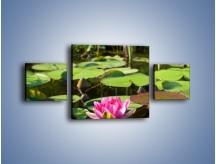 Obraz na płótnie – Ciemno-różowy nenufar na wodzie – trzyczęściowy K014W4