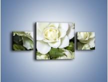 Obraz na płótnie – Białe róże na stole – trzyczęściowy K131W4