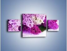 Obraz na płótnie – Bez w różnych kolorach – trzyczęściowy K389W4
