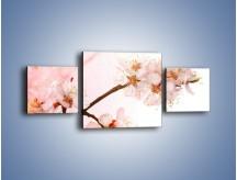 Obraz na płótnie – Blask kwiatów jabłoni – trzyczęściowy K569W4