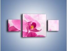 Obraz na płótnie – Ciemny róż w storczyku – trzyczęściowy K588W4