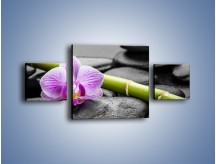 Obraz na płótnie – Bambus czy storczyk – trzyczęściowy K686W4